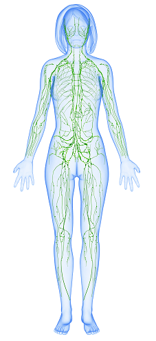 7 Ways to Improve Lymphatic Health in Los Angeles
